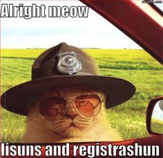 but officer.....right meow!!