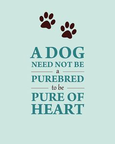 """Amen! My mixed breed dogs have been smarter, healthier and more loving than the """"purebred"""" dogs I've had. By the way... how many of your high dollar purebreds are really pure bred? :)"""