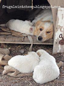 Frugal Ain't Cheap: Pet safe flea control