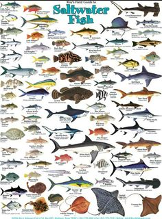 Types of salt water fish. www.facebook.com/groups/nauticalboss