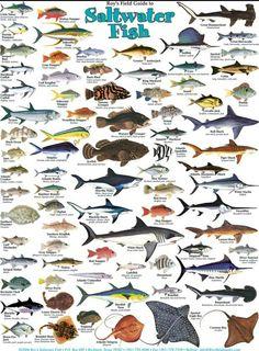 Types of salt water fish.  www.facebook.com/groups/nauticalboss