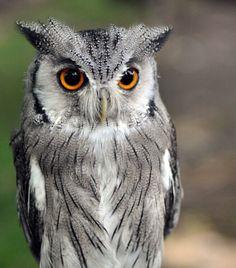 #cute#owl