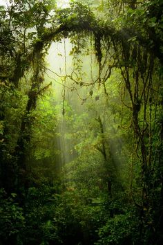 noisiaz:  Photography, art, nature, love. Enjoy.
