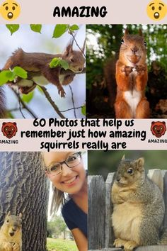 Police Memes, Wireless Dog Fence, Plants Vs Zombies, Cute Comfy Outfits, We Remember, Amazing Flowers, Cute Guys, Squirrel, Fun Facts
