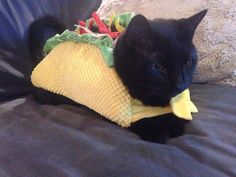 Taco | 16 Adorable Pets Who Dressed Up As Food For Halloween