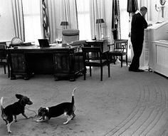 In this photograph, taken in the Oval Office on April 26, 1966, President Lyndon B. Johnson reads a printout from the wire service ticker tapes while his beagles, Him and Her, play behind him. Johnson had the wire service tickers installed in the Oval Office to print a running news stream in an effort to stay informed. Credit: Yoichi Okamoto/Lyndon B. Johnson Presidential Library and Museum/NARA #whitehouse #ovaloffice #lbj #beagles #pets #journalism #lyndonbjohnson #POTUS