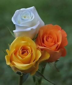 New amazing flowers pics every day, be the first to see them! Fantastic flowers will make your heart open.