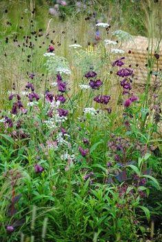 Aminek, sedum 'Matrona' and penstemon cv. 'Raven', and in the background k rwiściąg medical and tufted hair grass English Gardens, Hampton Court Flower Show 2014 - photo report