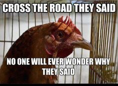 Cross the road they said…