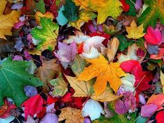 """""""Autumn is a second Spring, when every leaf is a flower."""" ~ Albert Camus (j) Leave In, Autumn Cozy, Favim, Rainbow Colors, Autumn Leaves, Color Splash, Mother Nature, Seasons, Flowers"""
