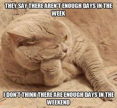 Deep Kitty Thoughts!