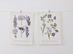 Vintage Flower Illustrations - lilac and purple colours #folksy #peonyandthistle