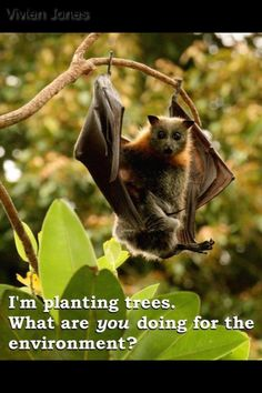 Please protect bats and other pollinators!