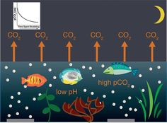 Protecting coral reefs with bubbles