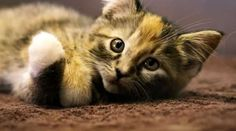 MAKE's Talking Kitten Commercial Will Have You Adopting Furry Friends #cutepets #animalphotography