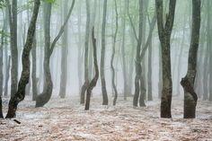 Misty - Spring snow in Aomori #japan