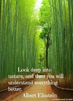 We can never stop marvelling at the ingenious and unique ways in which Nature presents its designs. Here are ten quotes on how nature inspires creativity Nature Words, Nature Images, Nature Pictures, Nature Videos, Source Of Inspiration, Life Inspiration, Nature Photography Quotes, Forest Quotes, Tree Quotes