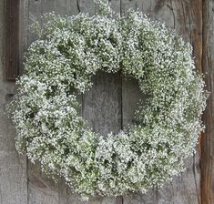 """Gypsophila is sometimes called """"baby's breath"""" or simply """"Gyp"""" among the floral industry. Its botanical name means """"lover of chalk"""" because many species are found oncalcium-rich soils, includinggypsum, hence the name of the genus."""