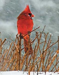 Braving the Storm....My mom's favorite bird. I always think of her whenever I see one! :)