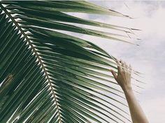 Palms please #swimwearworld