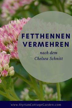 Mit dieser Schnitt Technik die Standhaftigkeit der Pflanzen erhöhen und die Blüte verlängern Chelsea, Plants, Shade Perennials, Plant, Planets, Chelsea Fc, Chelsea F.c.