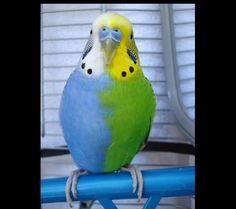 Gli animali dai colori più strani, quando la natura è meglio di Photoshop