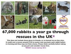 67,000 rabbits per year go through UK rescues :o( Please rescue bunnies instead of breeding or buying them.