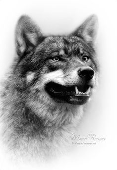 Ideas tattoo wolf realistic wolves art Ideas tattoo wolf realistic wolves artYou can find Wolves art and more on our Ideas tattoo wolf realistic wolves art Wolf Images, Wolf Pictures, Wolf Tattoo Design, Tattoo Designs, Wolf Tattoos Men, Tattoo Wolf, Tattoo Art, Animal Paintings, Animal Drawings