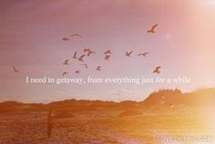 need to get away quotes photography quote birds sun free guy lifequote
