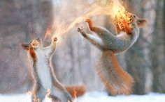 -- Fire pinecone -- by 0l-Fox-l0