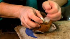 How to Needle Felt Animals - Fox Series 9: Eyes and Whiskers by Sarafina...