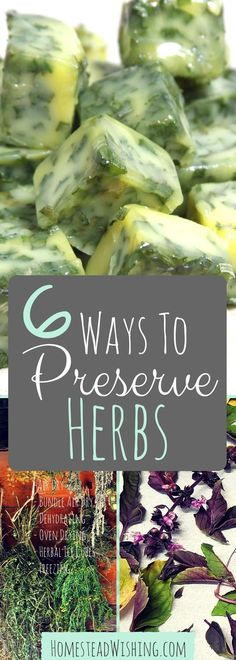 Come see the basics of preserving herbs. 6 Ways to Preserve Herbs. Homegrown herbs are 3 to 4 times stronger than store bought herbs! | Homestead Wishing, Author, Kristi Wheeler | http://homesteadwishing.com/ways-to-preserve-herbs/ | preserving-herbs, food-preservation, how-to-preserve-herbs |