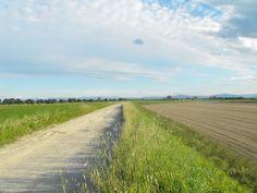Tra Brancere e Stagno Lombardo - Provincia di Cremona - Maggio 2013