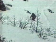 'Bigfoot' DNA Matches Rare Polar Bear : British Geneticist - UFO News | Aliens | UFO Sightings | Space News | UFO 2016 #UFO's