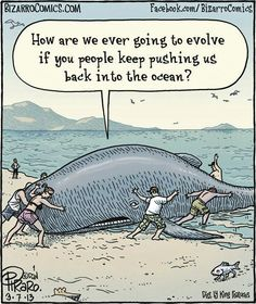 Whale problems.