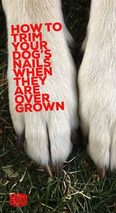 How to trim dog nails when they are overgrown. #GoodDoggies #dogs