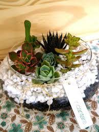 Resultado de imagem para terrario de suculentas