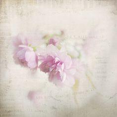 Loving Spring | Flickr - Photo Sharing!