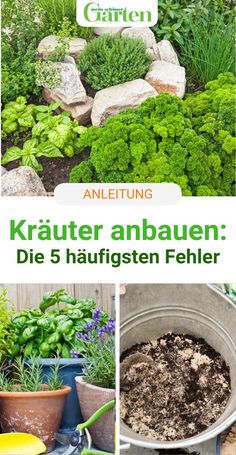 Kräuter anbauen: Die 5 häufigsten Fehler - #Anbauen #die #Fehler #häufigsten #haus #Kräuter Garden Compost, Garden Soil, Hydrangea Care, Different Plants, Growing Herbs, Hedges, Permaculture, Organic Gardening, Shrubs