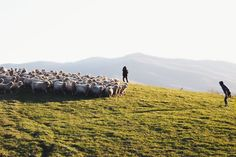 A flock of sheep by Jungwoo Lee on 500px