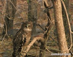 Bird bops owl on the head...