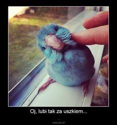 sweety bird ...  miluszaki.pl