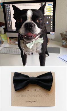 bow ties for doggies