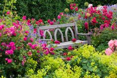 Planting Roses, Rose Gardening, Designing with Roses, English Roses, Garden retreat, garden roses, Rose bushes, English Roses, Rose Darcey Bussell, Rose Munstead Wood, Rose Lady of Megginch, Lady's Mantle, Alchemilla Mollis, Nepeta Walker's Low, Catmint,