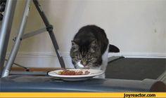 Que Cat Animals Giff #24510 - Funny Cat Giffs|Funny Giffs|Cat Giffs