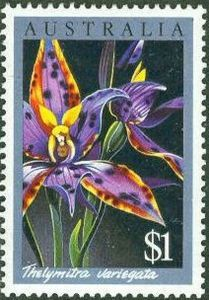 Thelymitra variegata