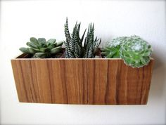 """Wall Planter (8""""), Hanging Planter, Plant Holder, in sustainable TEAK wood, roughly 8""""x3""""x3"""", air plants sold separately"""