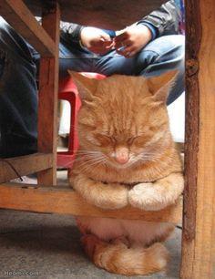 ウトウト・・・座りながら寝ちゃう猫が可愛すぎる - ペット日和