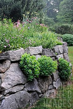 TERRACED_GARDEN_WITH_FLOWERING_PERENNIALS