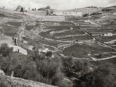 Jerusalem 1900-1901 The City of David is under the fields